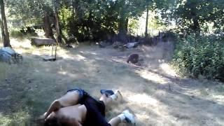 getlinkyoutube.com-ogden backyard fight