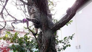 【地域猫】茶奈津ファミリー、メタボ対策始めました。【魚くれくれ野良猫】