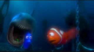 un quile... un tiburón acecino...