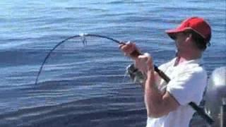 getlinkyoutube.com-صيد اسماك القرش 9
