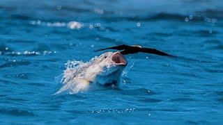 Bird vs Fish   Blue Planet II