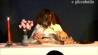getlinkyoutube.com-Marieles Dinner - Funny dog eats elegant at table