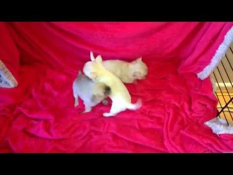 Watch the Cute Puppies Playing video