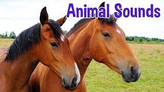 getlinkyoutube.com-Animal Sounds for Children (20 Amazing Animals)
