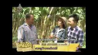getlinkyoutube.com-รายการคัมภีร์วิถีรวย กล้วยหอมทอง สกก ท่ายาง
