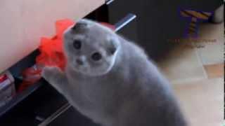 Cute cat feel guilty! (face shrek)