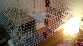 getlinkyoutube.com-保護した野良猫 ケージはダイソーで自作