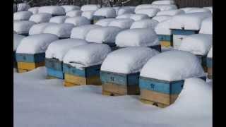 getlinkyoutube.com-Зимовка пчёл без утепления