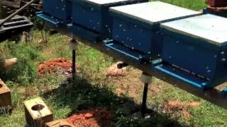 getlinkyoutube.com-Beekeeping: Building Ant Proof Hive Stands