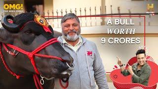 getlinkyoutube.com-India's Super Bull Yuvraj - Father of 150,000 Calves - OMG! Yeh Mera India