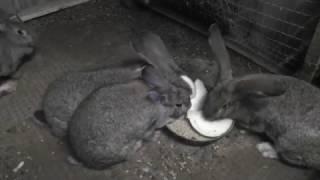 Кролики в яме. Прошло 3 месяца. Первый окрол.