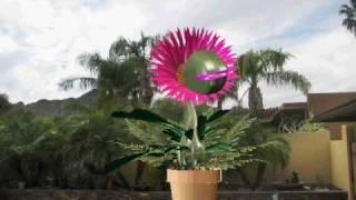 getlinkyoutube.com-Markie Funny ( Plant Monster )