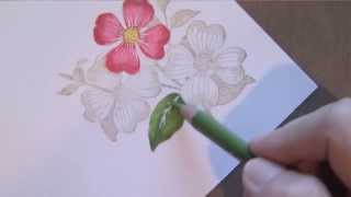 getlinkyoutube.com-Colored Pencil Flowers