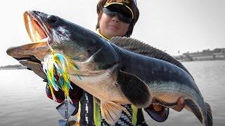 getlinkyoutube.com-เทคนิคการใช้เหยื่อใบพัดผิวน้ำ Slater ในการตกปลาชะโด
