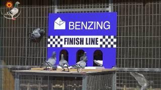 getlinkyoutube.com-Test liberation to check the new Benzing system clocks, Derby Cordoba Racing Pigeons 24.07.2014