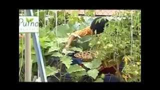 getlinkyoutube.com-Organic Terrace Garden