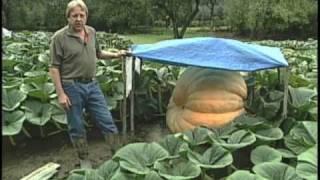 getlinkyoutube.com-Giant Pumpkins