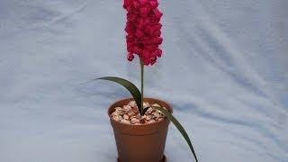 getlinkyoutube.com-Гиацинт из конфет. Букет из конфет. DIY Hyacinth of sweets.