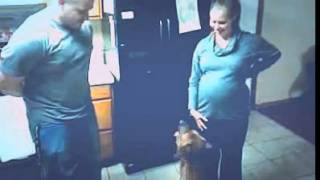 getlinkyoutube.com-كلب يدافع عن إمرأة حامل مشهد مؤثر جدا