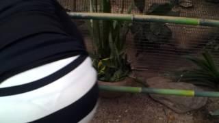 getlinkyoutube.com-Zoo today!