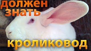 Разведение кроликов для начинающих - 50 советов кролиководу
