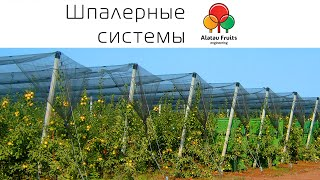 "getlinkyoutube.com-Шпалера компании ""Alatau Fruits Engineering"""