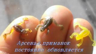 getlinkyoutube.com-Эксклюзивные съедобные силиконовые приманки/silicone bait