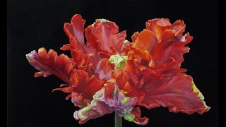 getlinkyoutube.com-How to Paint a Red Parrot Tulip Flemish Technique Oils or Acrylic