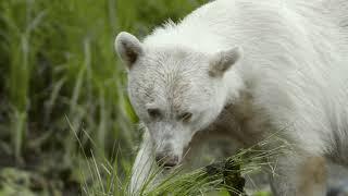 Spirit Bear Lodge in BC's Great Bear Rainforest width=