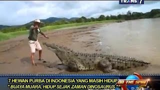 getlinkyoutube.com-On The Spot - 7 Hewan Purba di Indonesia yang Masih Hidup