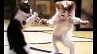 getlinkyoutube.com-rabbit and cat singing and dancing loooool