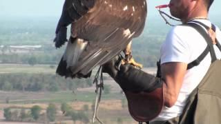 getlinkyoutube.com-Golden Eagle Training, 5th Week Practicing