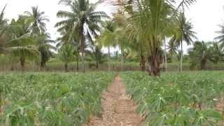 getlinkyoutube.com-Thailand Study Tour 2013 - Agriculture Farming