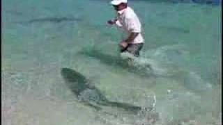 getlinkyoutube.com-Fishing Big Monster Tarpon (sabalo) in the Caribbean Sea, Cuba Destinations
