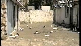 getlinkyoutube.com-Баку настоящие голуби 1