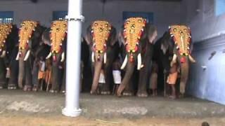 getlinkyoutube.com-Elephants are stars