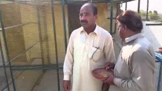 getlinkyoutube.com-Ustad Heraa Bina walaa champion punjab2015 sialkot