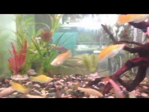 Aneka Ragam Ikan Hias (by. Dwi Estu Hiasti W)
