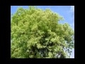 Madre terra: Music video