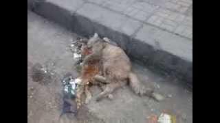 getlinkyoutube.com-قطة تعانق وتبكي على اختها الميته