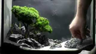 getlinkyoutube.com-Bonsai Aquarium   Acquario Bonsai   Step by Step