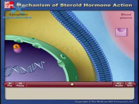 Mecanismos de Accion de Hormonas Esteroides