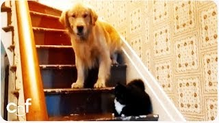 "getlinkyoutube.com-Dog Afraid of ""You Shall Not Pass"" Cat 