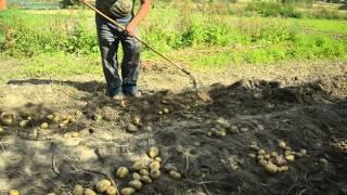 getlinkyoutube.com-копаем картошку. приспособа для копки картошки