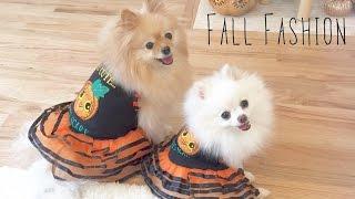 getlinkyoutube.com-Puppy Fall Fashion Show Lookbook