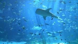 getlinkyoutube.com-largest aquarium tank in the world - world's largest aquarium