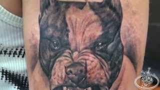 getlinkyoutube.com-Duke103.com Pitbull Tattoo.2013