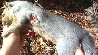 getlinkyoutube.com-Small Game Hunting #25: 1 Gray Squirrel by .22 Rifle