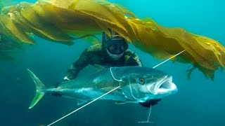 getlinkyoutube.com-Blue Water Spearfishing in Baja.m4v