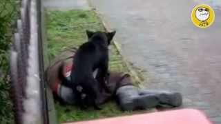 getlinkyoutube.com-Los mejores videos de humor y risa divertidos, mas graciosos del mundo YouTube 2013 Animales salidos